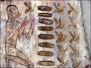 In Egyptian myth the golden stripes of the bee led to it being linked it to the sun and thus with Ra. Honey was a symbol of resurrection in ancient Egypt.